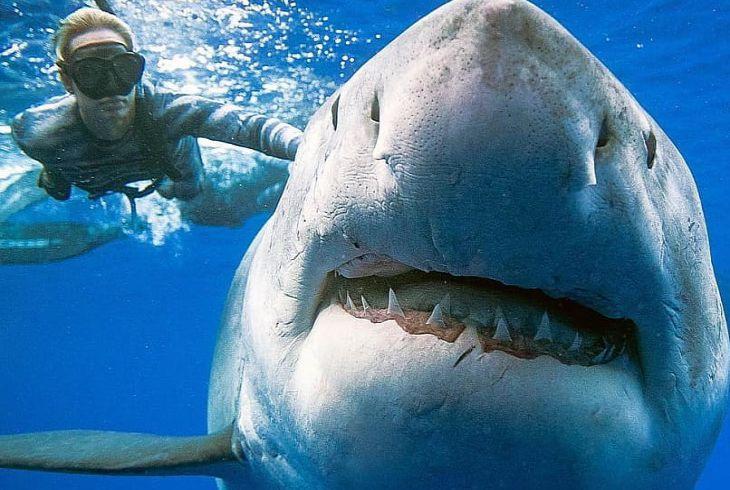 Гавайский фотограф опубликовал снимки с акулами, от которых захватывает дух (ФОТО)
