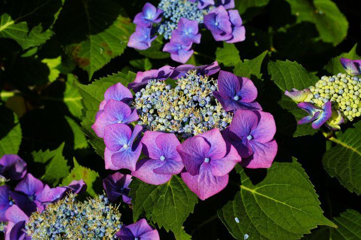 5 красивых растений, которые стоит иметь в саду