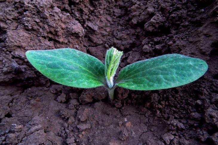чем подкормить рассаду чтобы развивались корни