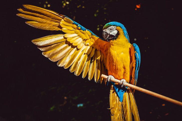 Попугаи-сквернословы изграфства Линкольншир возмутили гостей  заповедника