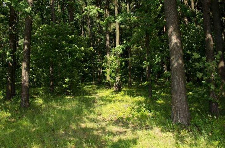 Где в Беларуси с 11 июня запретили ходить в лес