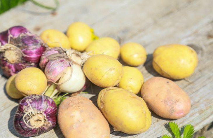 Какие сидераты лучше сеять осенью на месте выкопанного картофеля