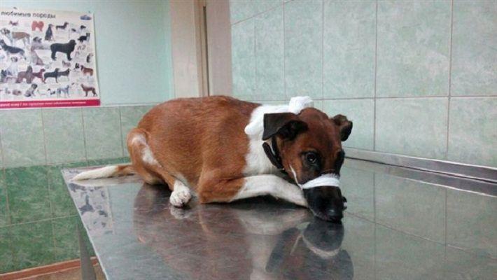 ГАИ ищет водителя, сбившего собаку в Минске