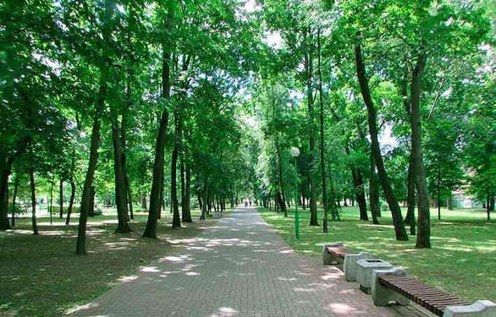 В брестском парке ветка упала на девочку — она в реанимации