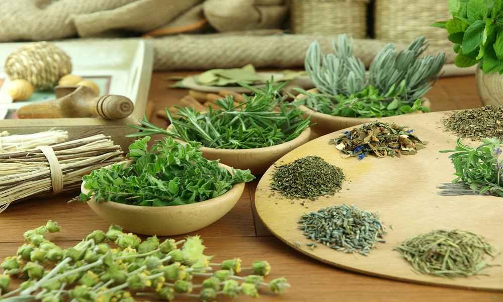 Пряно-вкусовые овощные культуры
