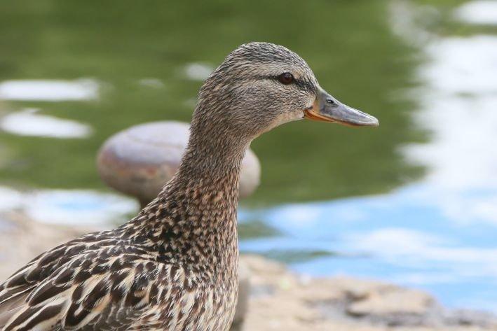 Беларусь ограничивает поставки птицы из 3 областей России