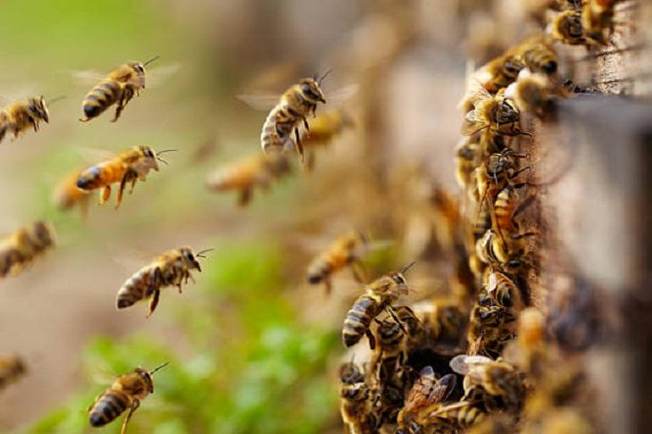 Ученые поняли, зачем пчелы формируются в комок