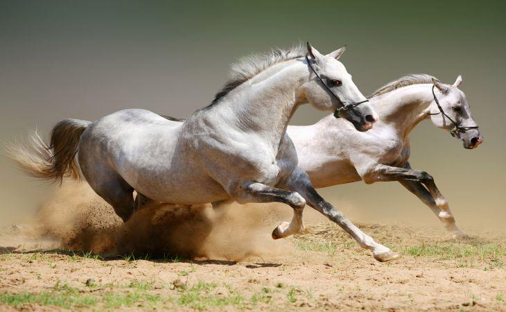 Лошади могут припомнить вам старые обиды – ученые