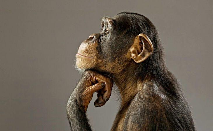 Швырять камни и обниматься: как обезьяны прощаются с умершими родственниками