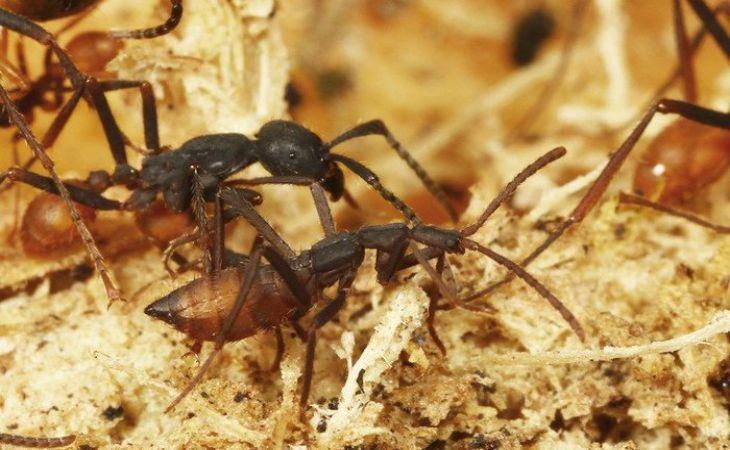 Биологи обнаружили жуков-маньяков