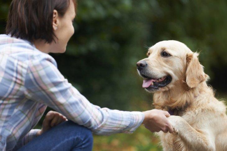 Ученые доказали, что необыкновенный интеллект собак является мифом