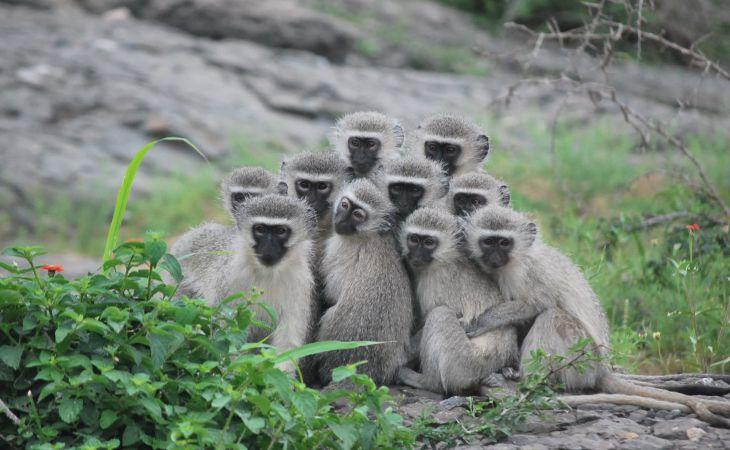 Ученые рассказали о «женской солидарности» у обезьян