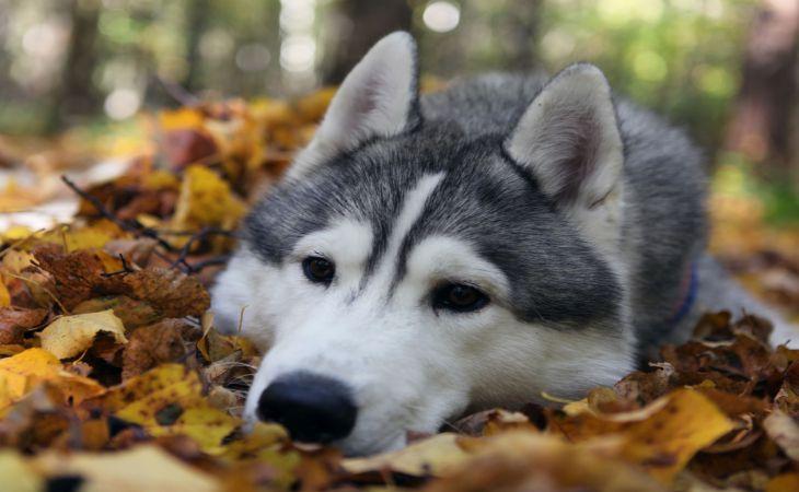 Ученые: собаки разучились мириться из-за людей