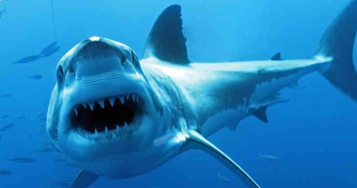 Ученые: Акулы в процессе эволюции потеряли нюх и цветное зрение