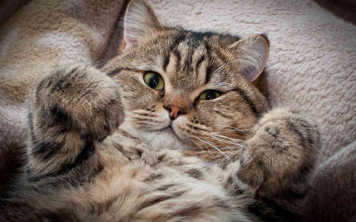 Учёные считают, что кошки любят людей больше, чем собаки