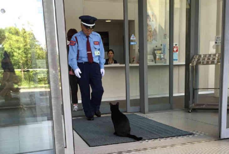 Два уличных кота уже два года пробуют  попасть вяпонский музей
