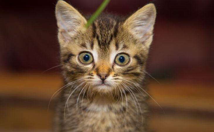 Как понять, что у кошки стресс