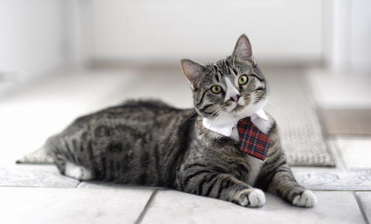 Учёные рассказали, какие кошки хорошо ладят с детьми
