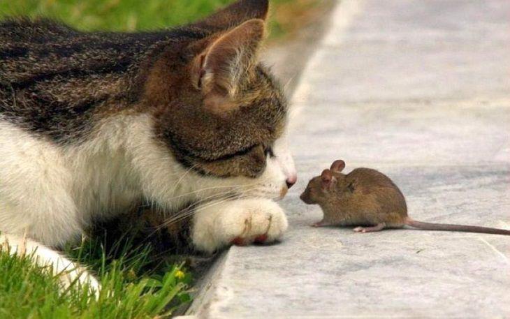 Учёные: оказалось, что уличные кошки плохо ловят крыс