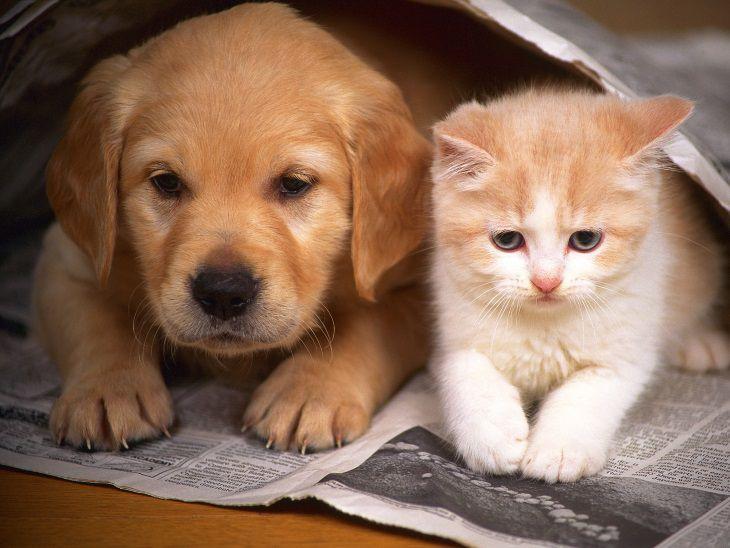 Учёные рассказали почему людям нравится «мучать» котят и щеночков