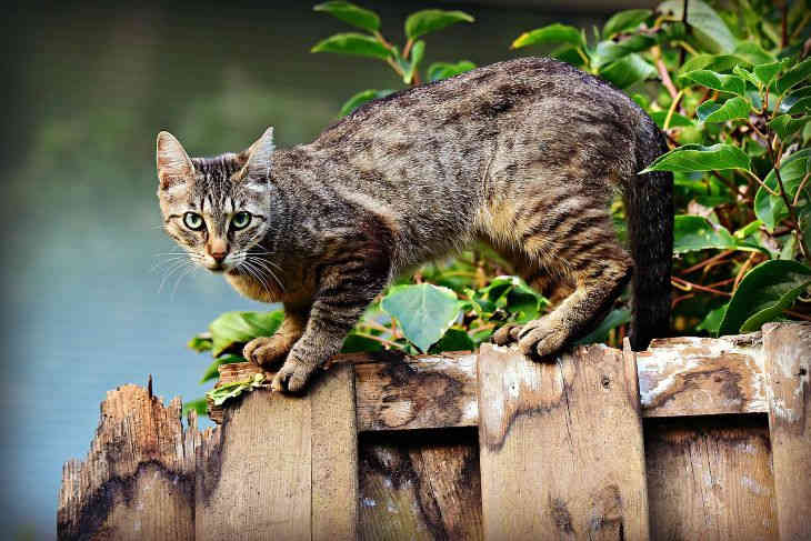 Ученые рассказали, почему мурчат кошки