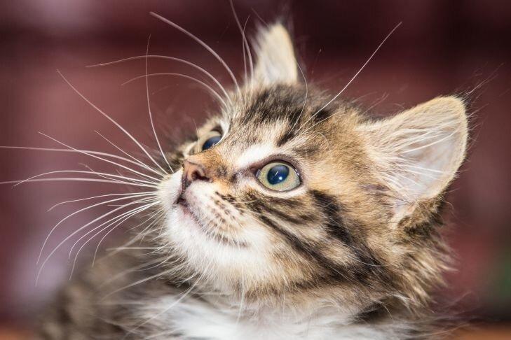 Что должен знать каждый владелец кошек