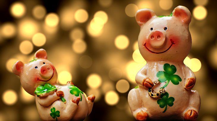 Ученые рассказали, почему свиньи любят грязь