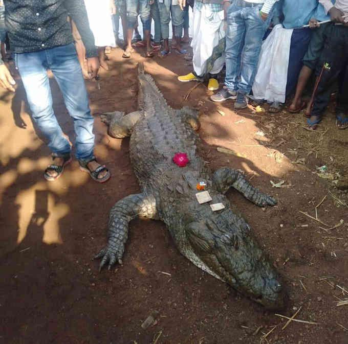 ВИндии 500 человек пришли напохороны крокодила