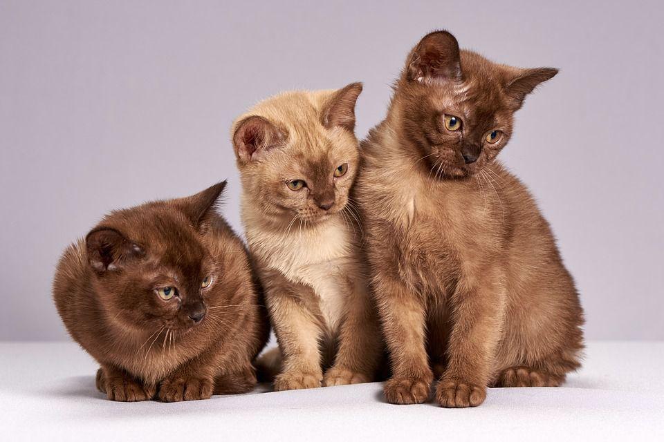 Ученые обнаружили неожиданную опасность домашних кошек