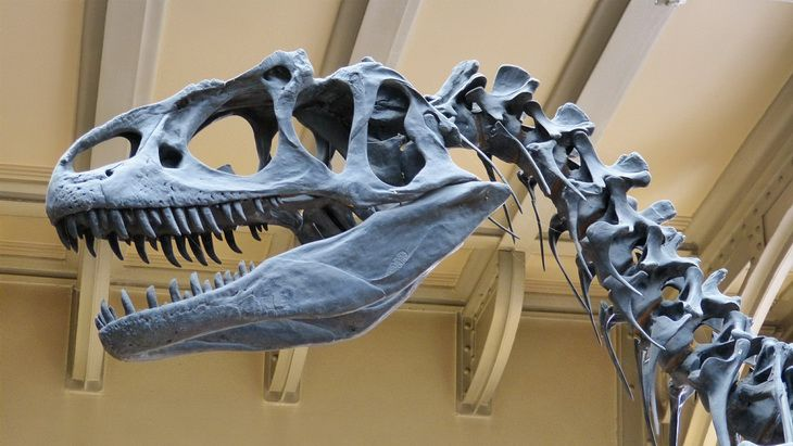 Прародителей динозавров отыскали в Антарктиде