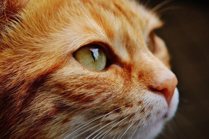 Ученые: бездомные коты могут спасти от смертельной болезни
