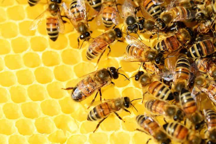 Исследователи узнали о способности пчел считать