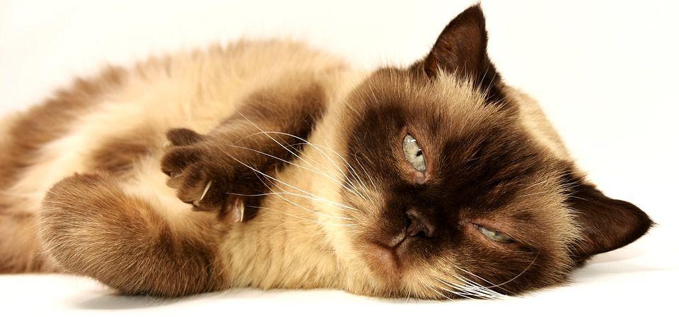Ученые рассказали, почему кошка нужна в каждом доме
