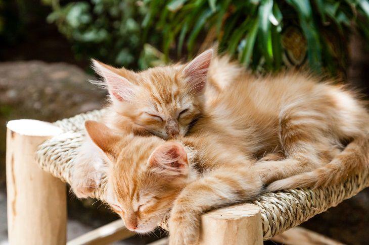 Ученые: кошки чаще собак подражают хозяевам