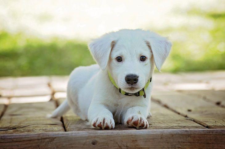 Учёные связали черты характера собак с их возрастом