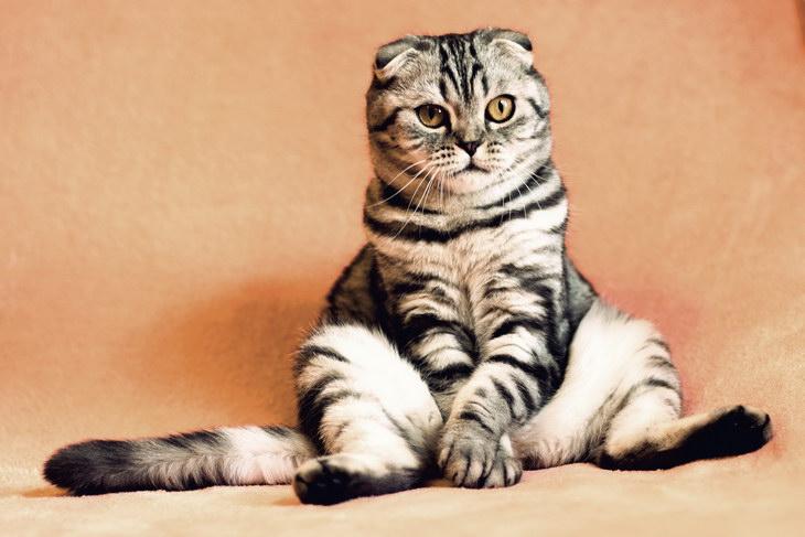 Ученые выяснили, что кошки копируют черты и привычки хозяина