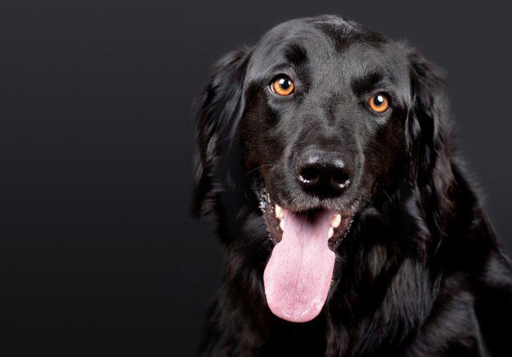 Ученые объяснили, почему выгул собак может быть опасным для пожилых людей