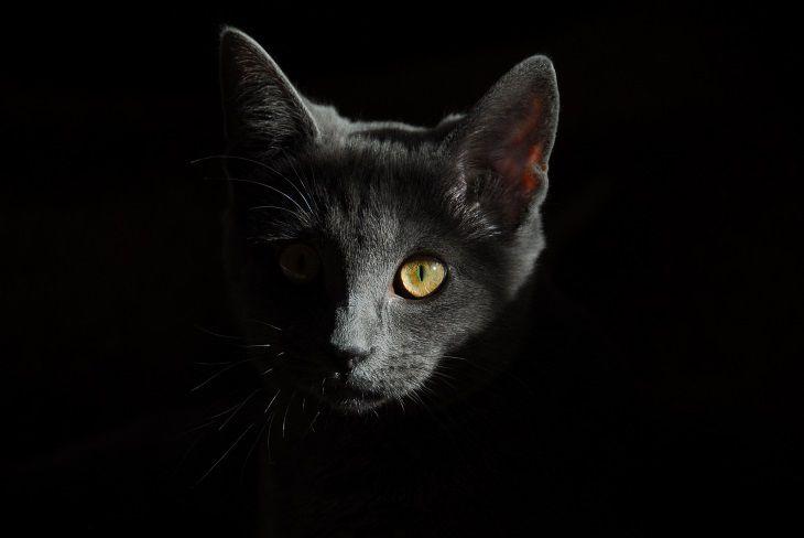 Учёные доказали лечебные свойства кошек