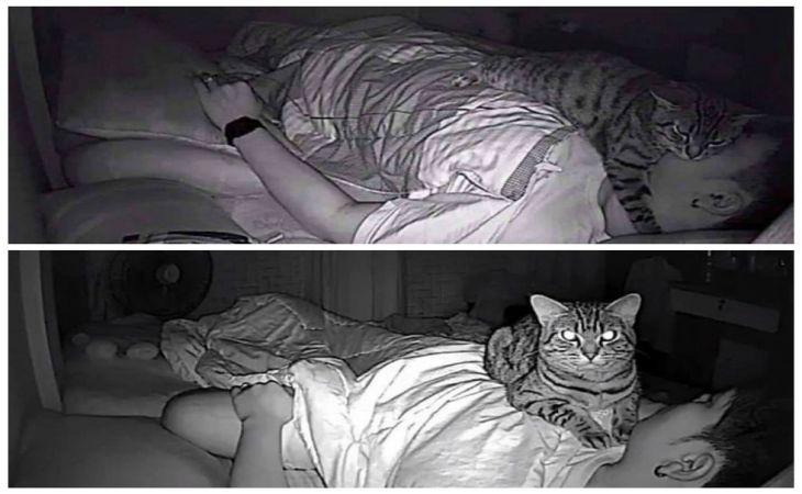 Мужчина установил ночное наблюдение за котом. Лучше бы он этого не делал