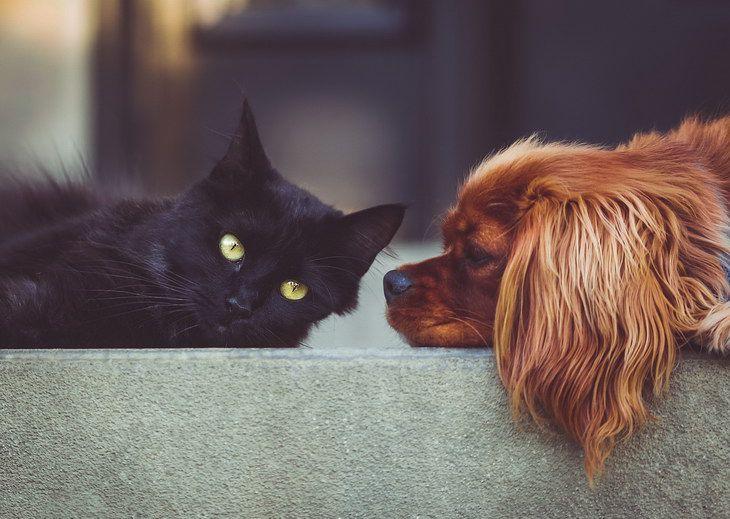 Ученые выяснили, кто любит хозяев больше – собаки или кошки