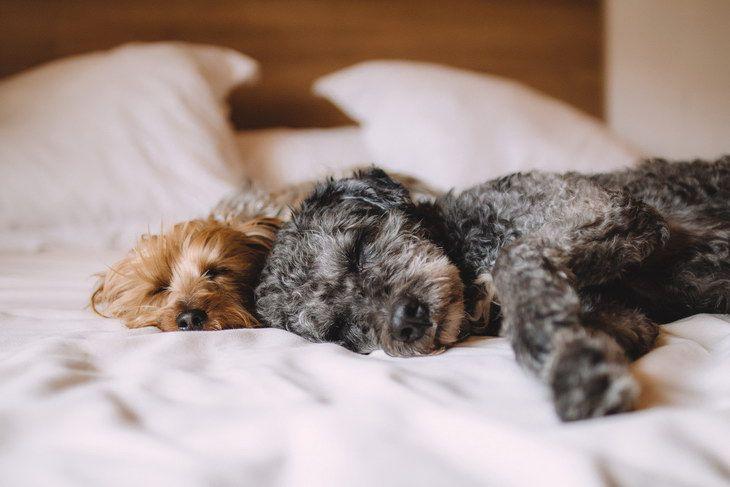 Ученые объяснили, зачем изучают собачьи сны