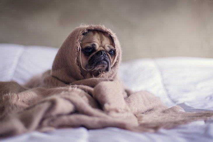 Ученые предупредили человечество об угрозе собачьего гриппа
