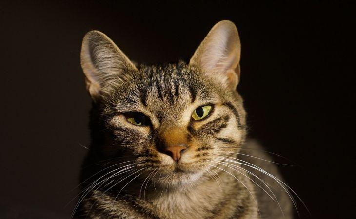 Ученые выяснили, что коты могут распознавать свое имя