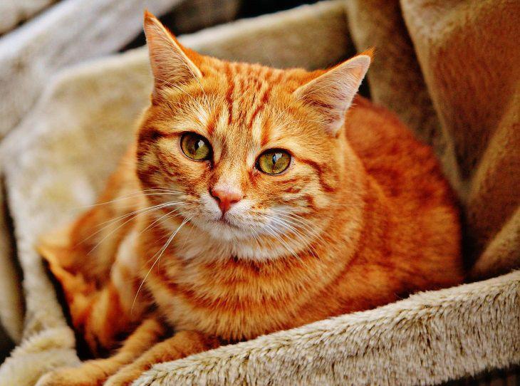 Ученые рассказали, что коты могут распознавать свое имя