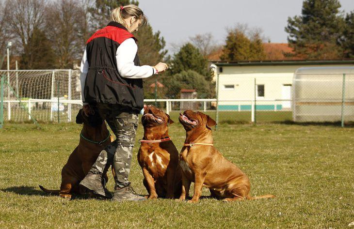 Ученые узнали, что владелиц собак чаще зовут на свидания