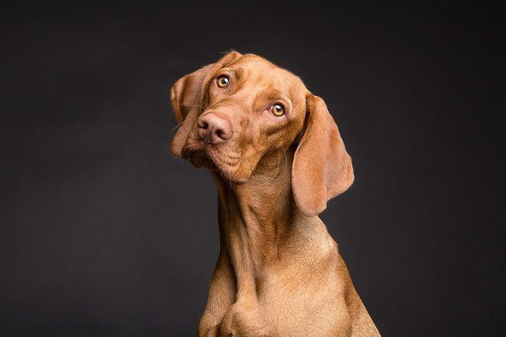 Ученые создали противораковую вакцину для собак