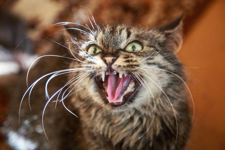 Кот вступил в бой с 6 псами и победил