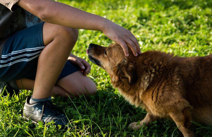 Ученые пр помощи ДНК установили связь между древними людьми и собаками