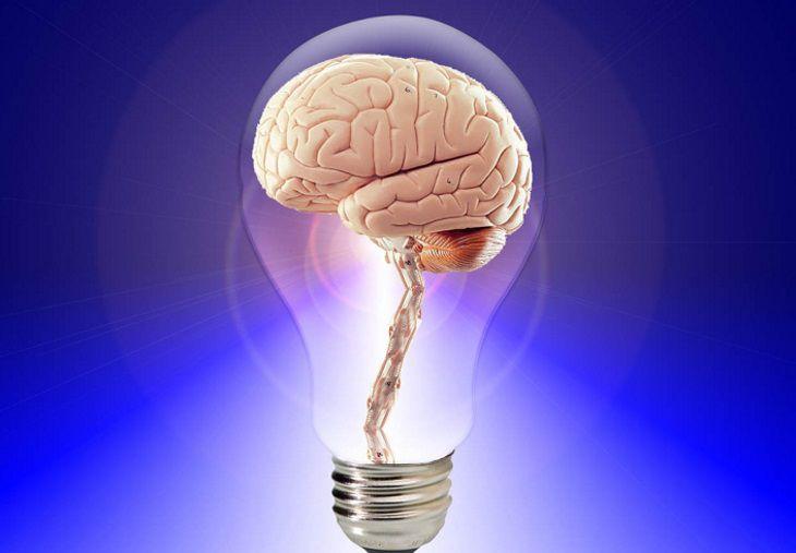 Ученые рассказали, как воздействует дефицит витамина B12 на мозг