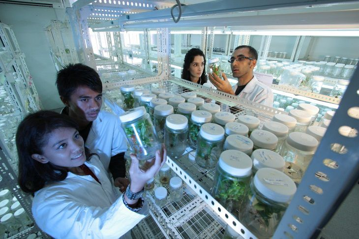 Ученые разработали, новый способ доставки лекарств к сосудам